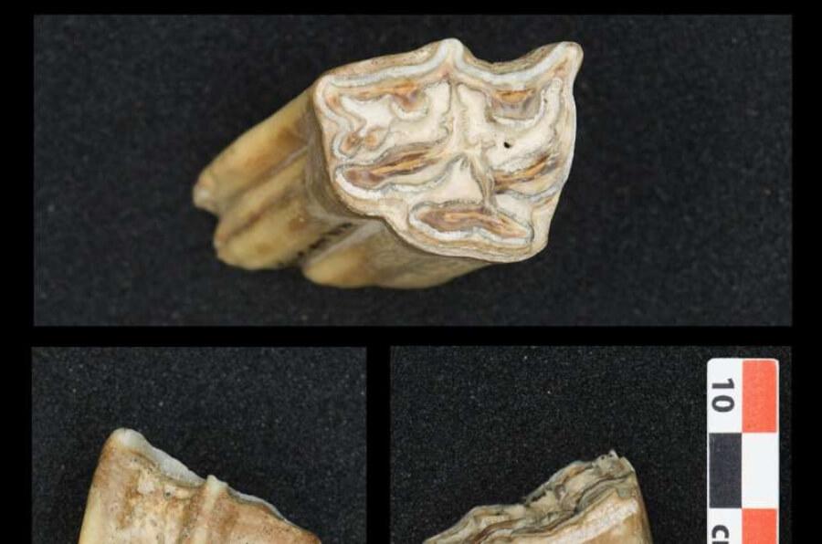 Los primeros grupos de Homo sapiens en Europa enfrentaron climas subárticos.