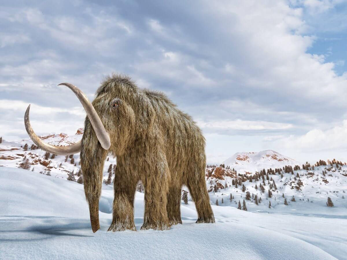 Recaudan $15 millones para revivir a mamut lanudo, que se extinguió hace miles de años.